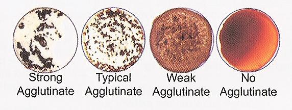 Agglutinate photo